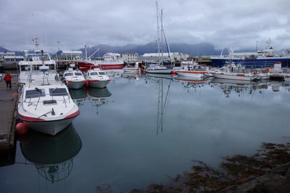 Bland lokala fiskebåtar får vi en plats i fiskeindustrihamnen i Höfn.
