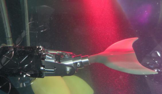 Delfinfenan pumpar upp och ned genom en snillrik koppling på propelleraxeln.
